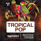 Singomakers tropical pop bass loops  drum loops  melody loops one shots vocals  fx  midi files vst synth patches 1000 1000